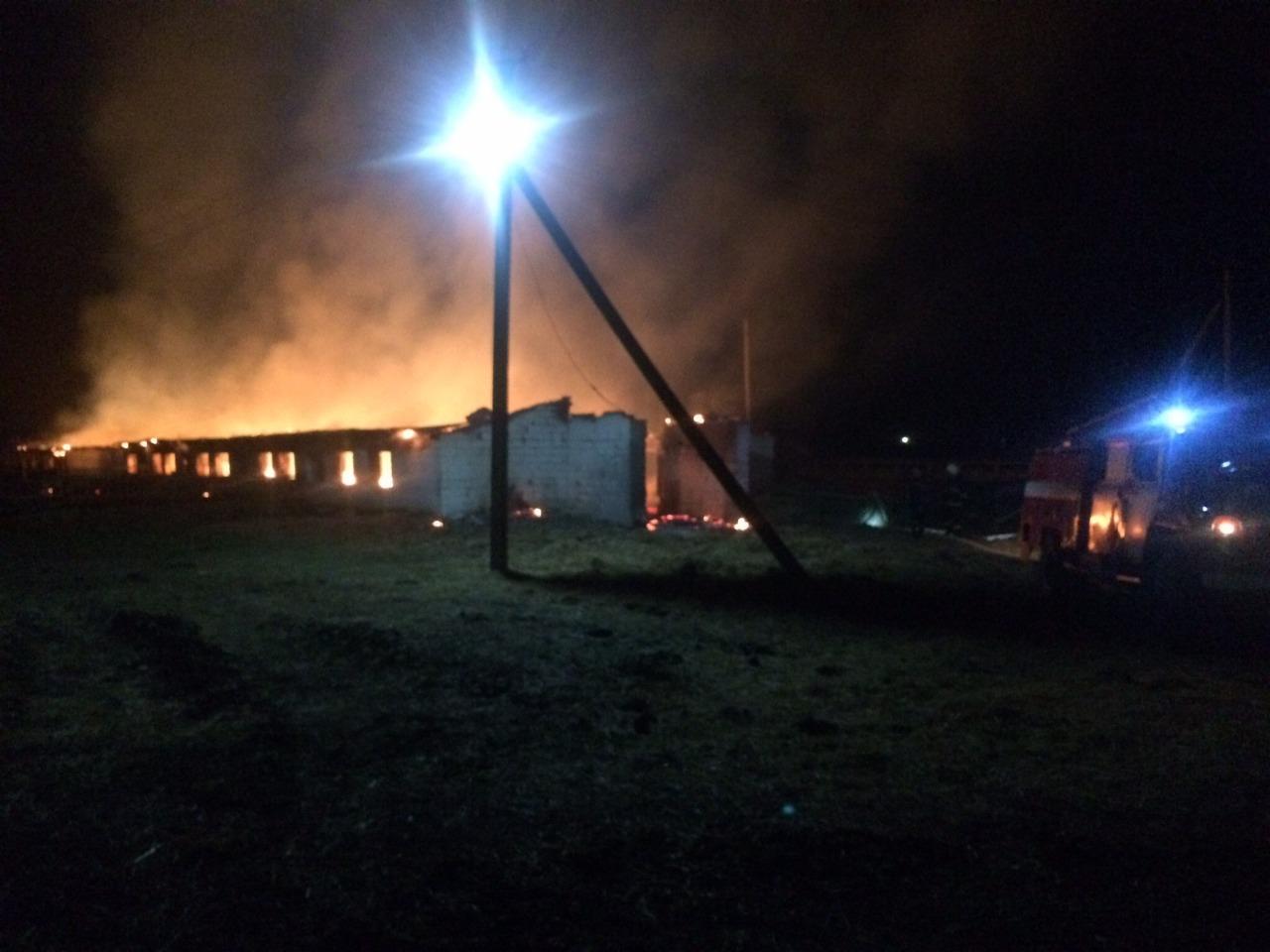 Полиция задержала поджигателей