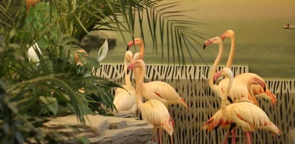 У Харкові фламінго в'їхали до вольєра в 120 квадратних метрів із басейном (відео)