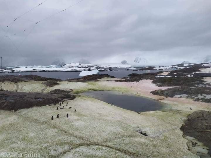 "В Антарктиде ""зацвел"" снег (фото)"
