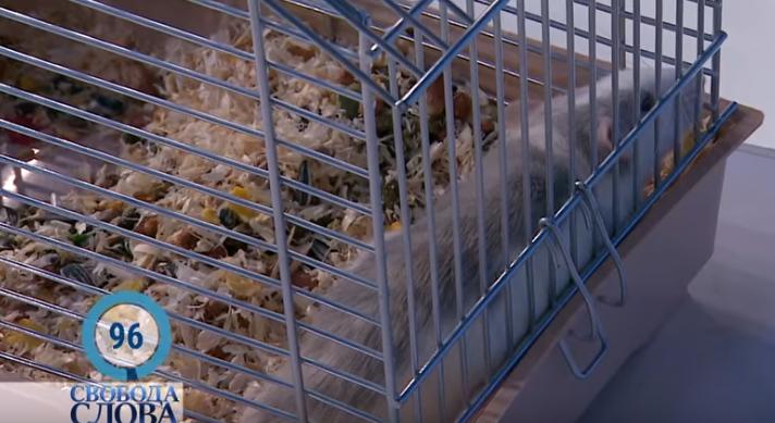 Саакашвили нашел для себя символ коррупции – крысу (видео, фото)