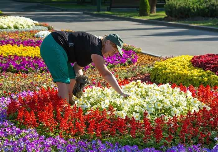 Харьков потратит более 20 миллионов на однолетние цветы
