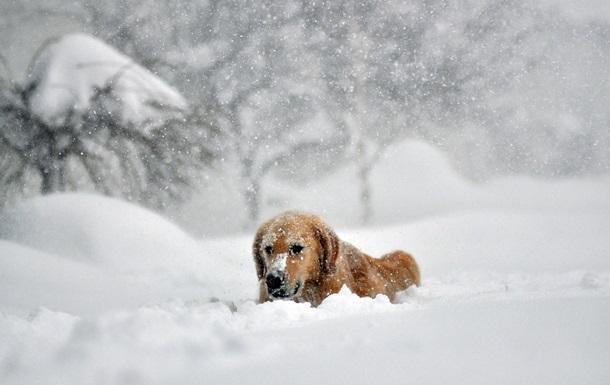В Харькове будет холодная и снежная неделя