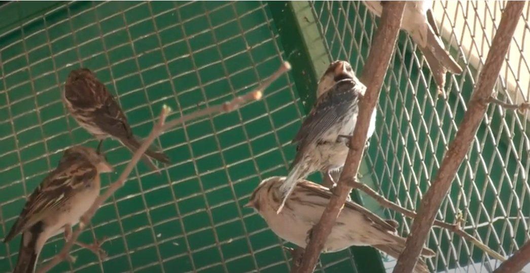 У Фельдман Екопарк п'ятий рік поспіль випускають птахів на волю