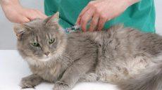В Харькове будут бесплатно вакцинировать домашних животных