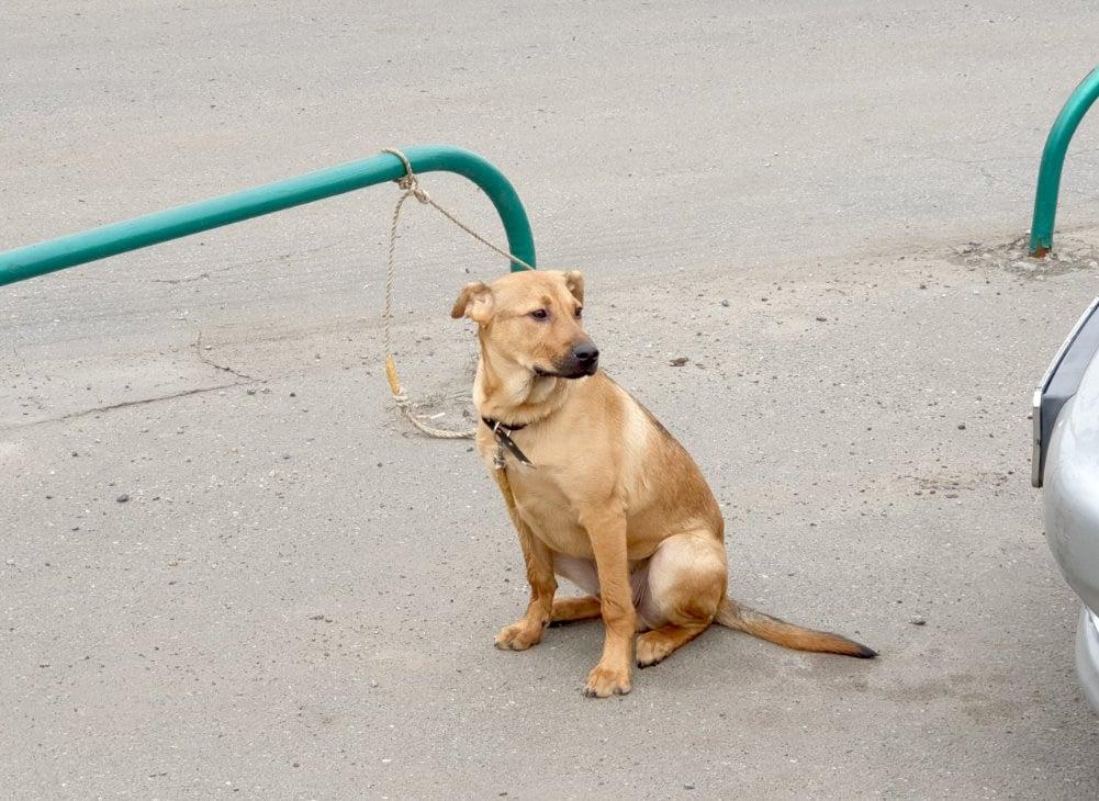 На парковке в Харькове бросили пятимесячного щенка (фото)