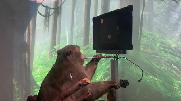 """Очипованная обезьяна и стартап Илона Маска: испытания """"силы мысли"""""""
