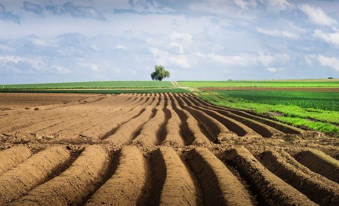 Рада внесла изменения в Земельный кодекс для запуска рынка земли