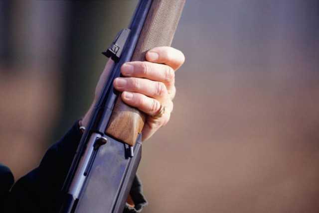 На Харьковщине расследуют случай стрельбы по стае диких собак