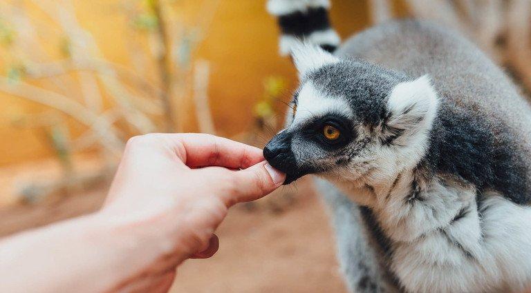 Заключенные в Великобритании будут снимать стресс в контактном зоопарке