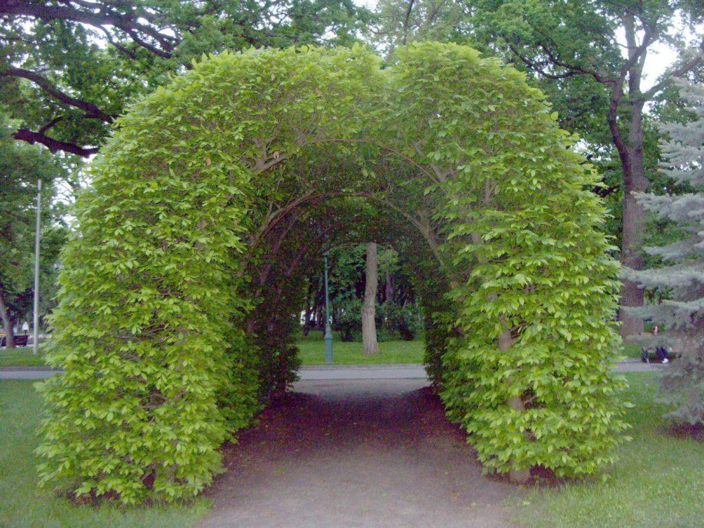 Арка из плетущихся растений - для селфи