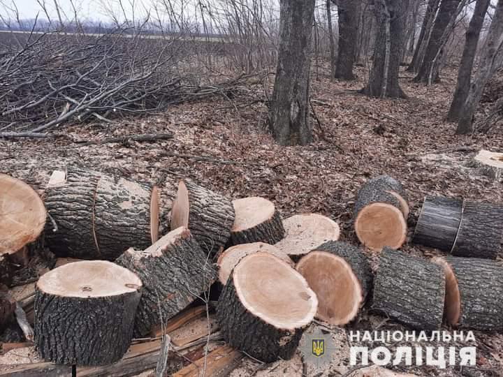 В Харьковской области черный лесоруб нанес ущерб на более чем 80 тыс. грн (фото)