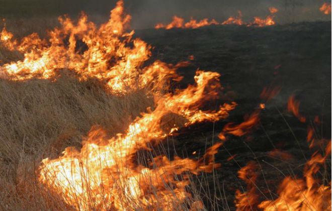 В Харьковской области за сутки спасатели ликвидировали 22 пожара в экосистемах