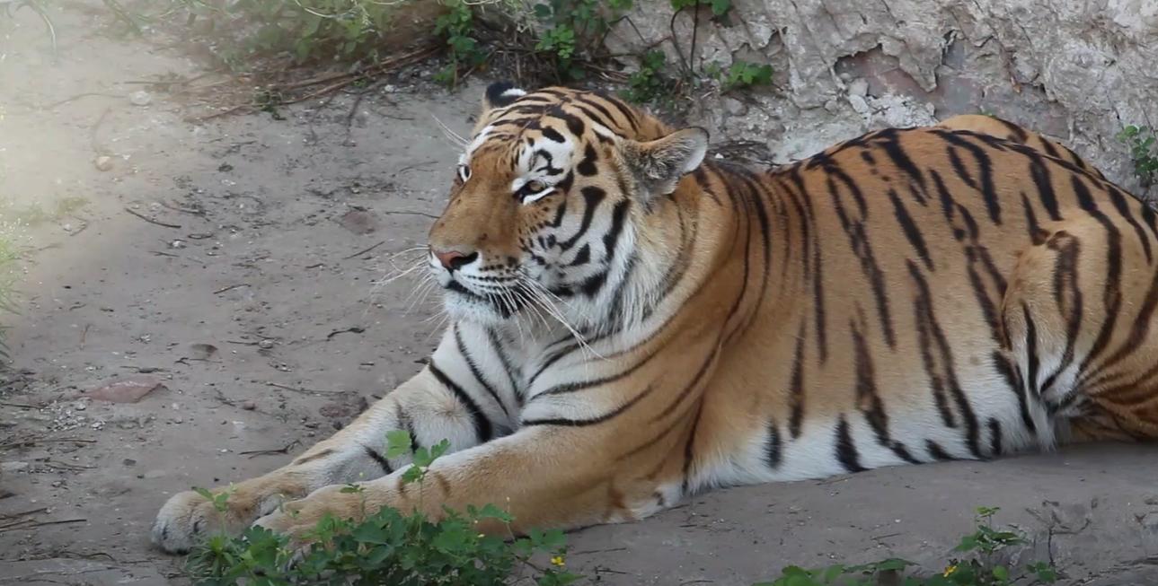 Тварини, які можуть вимерти: у зоопарку розповіли, як вберегти унікальні види (відео)