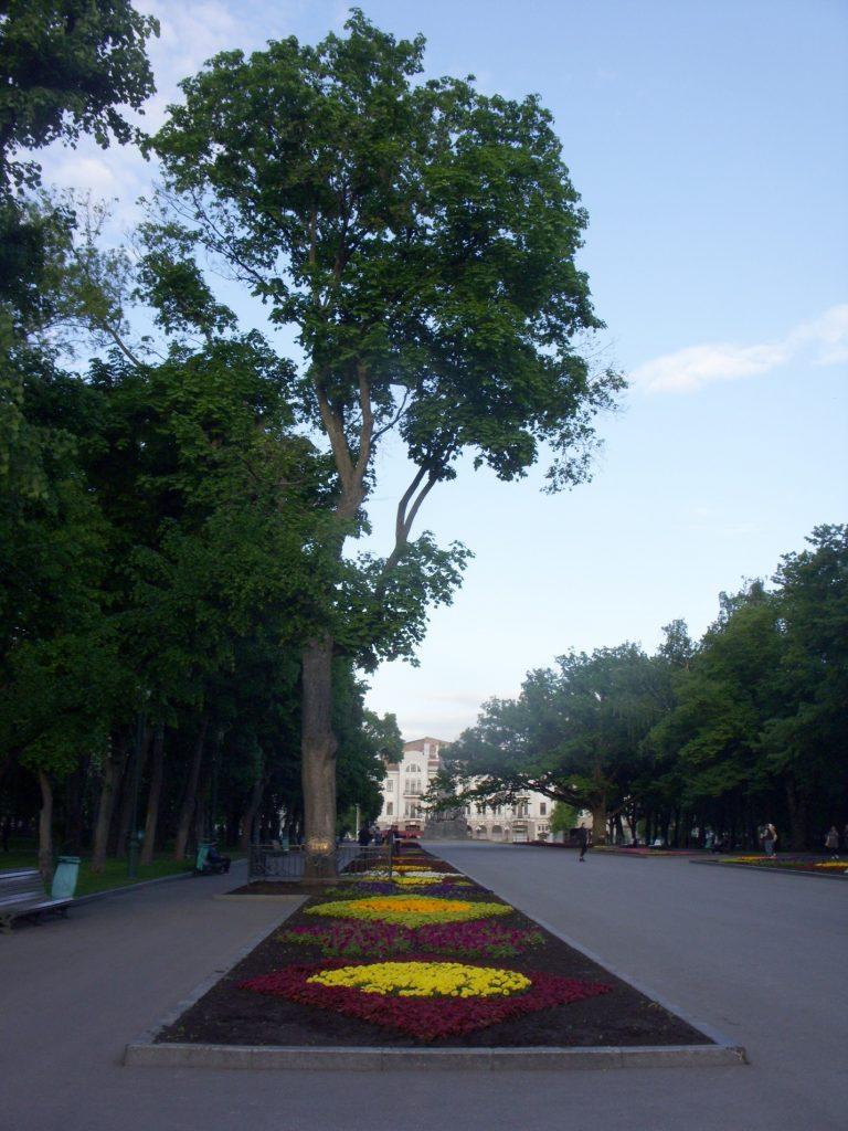 Дуб на главной аллее сада Шевченко в Харькове