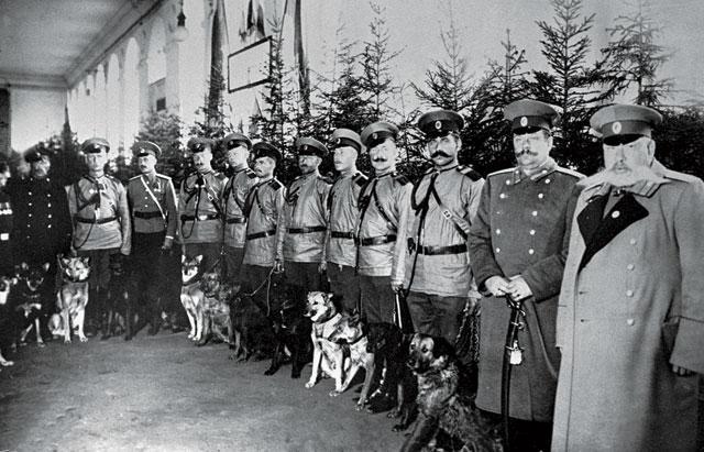 Полицейские с собаками. Фото из открытых исочников