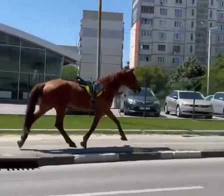 По Харькову бегает лошадь (видео)