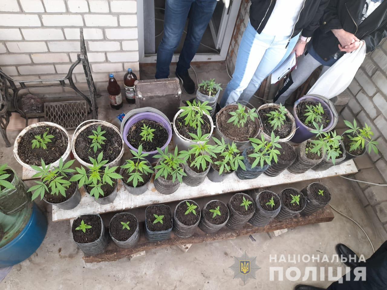 Полиция забрала у харьковчанина 50 горшков с коноплей (фото)