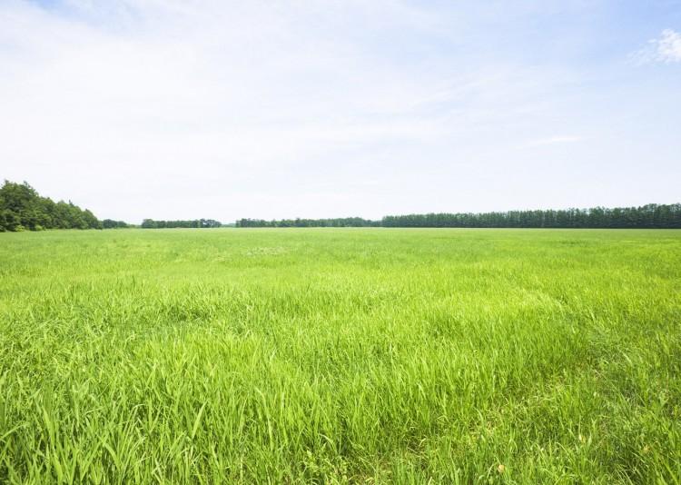 Утвержден порядок проверки покупателей земельных участков