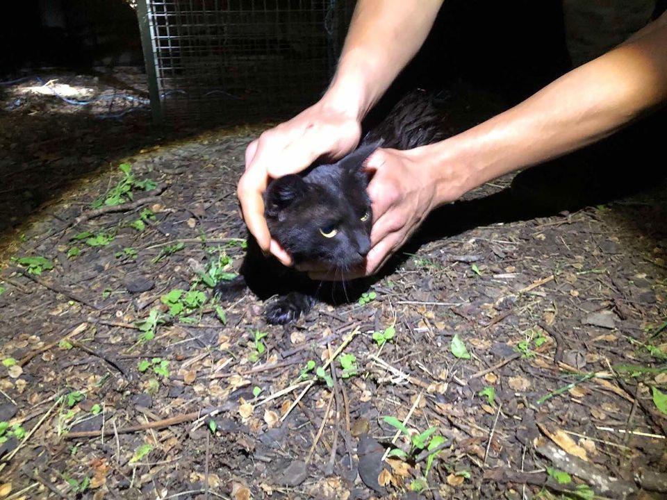 На Харьковщине из 15-метрового колодца достали кошку (фото)