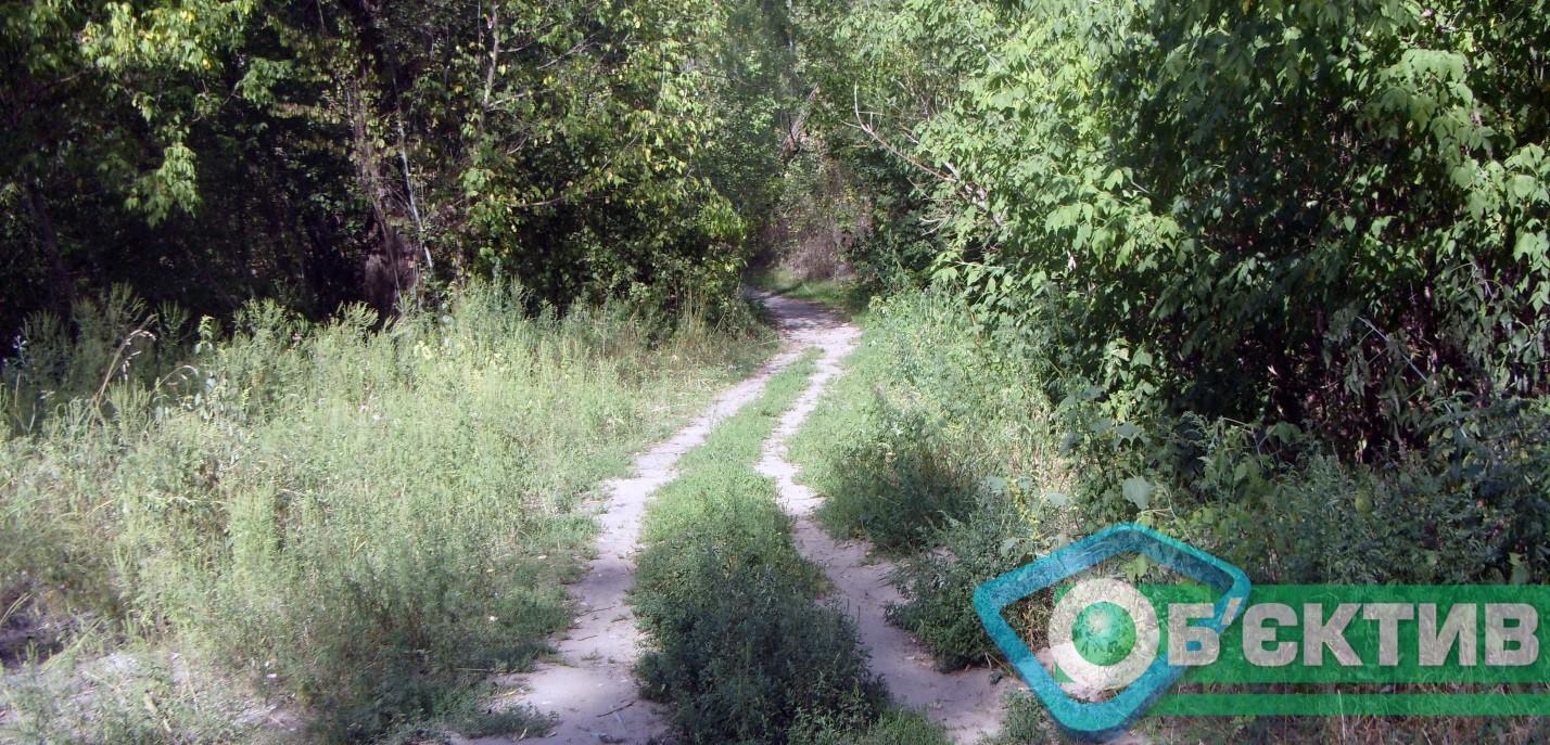 Лес под Чугуевом Харьковской области