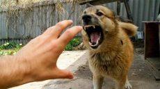 На Харьковщине участились случаи нападений и укусов людей собаками