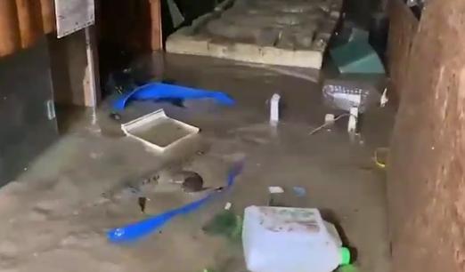 В Ялте из-за потопа на свободе оказались 70 крокодилов (видео)