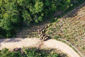 Слоны ушли на север Китая