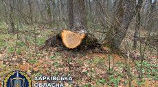 Из-за халатности лесника пострадали деревья