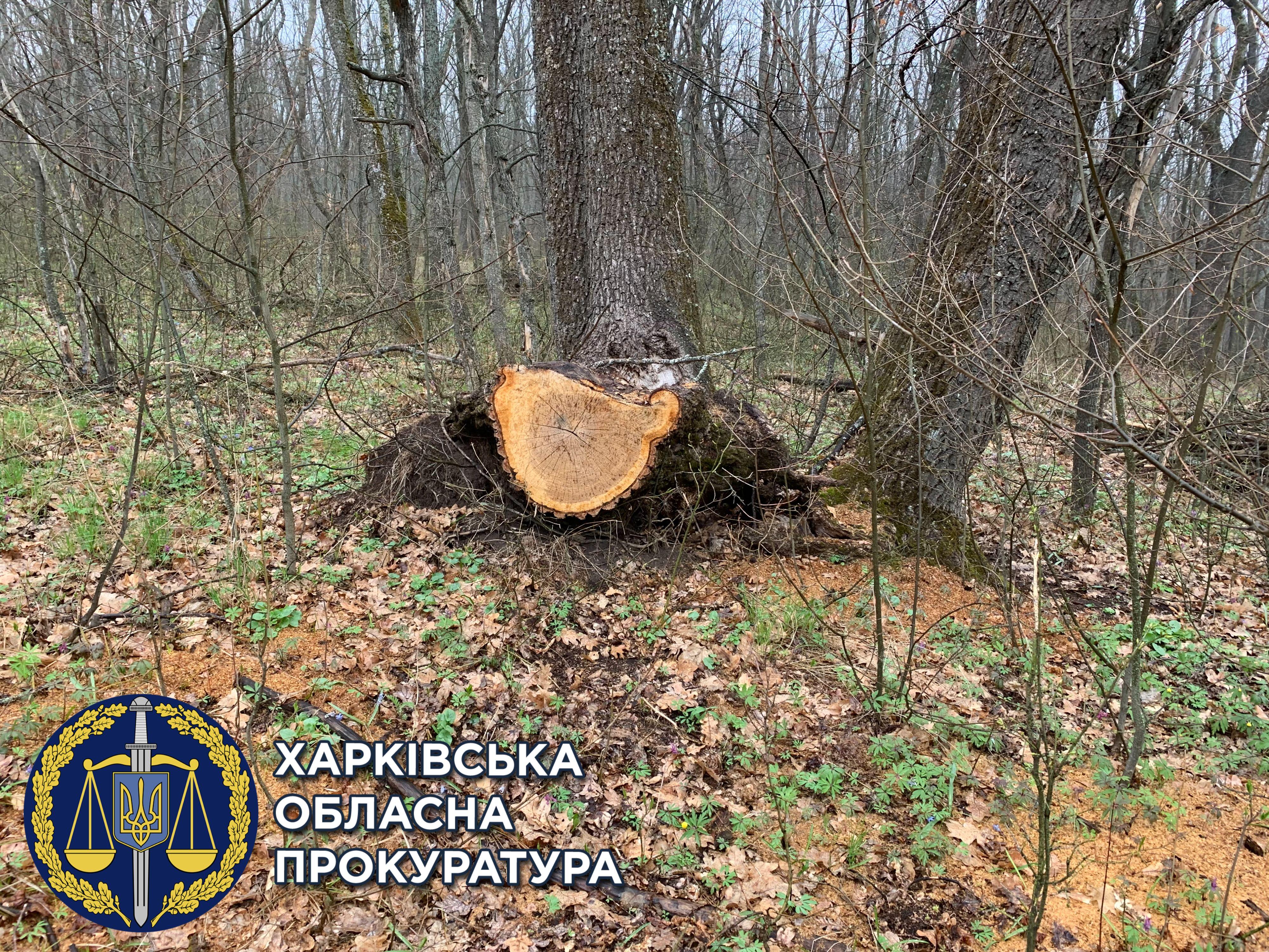 """За вырубку деревьев в """"лесу Сысы"""" государству компенсируют почти 1 млн грн"""