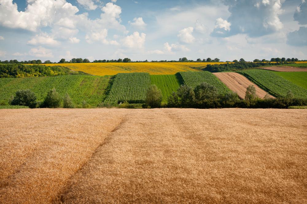 В Украине с 1 июля открыт рынок земли (цены, условия купли – продажи)