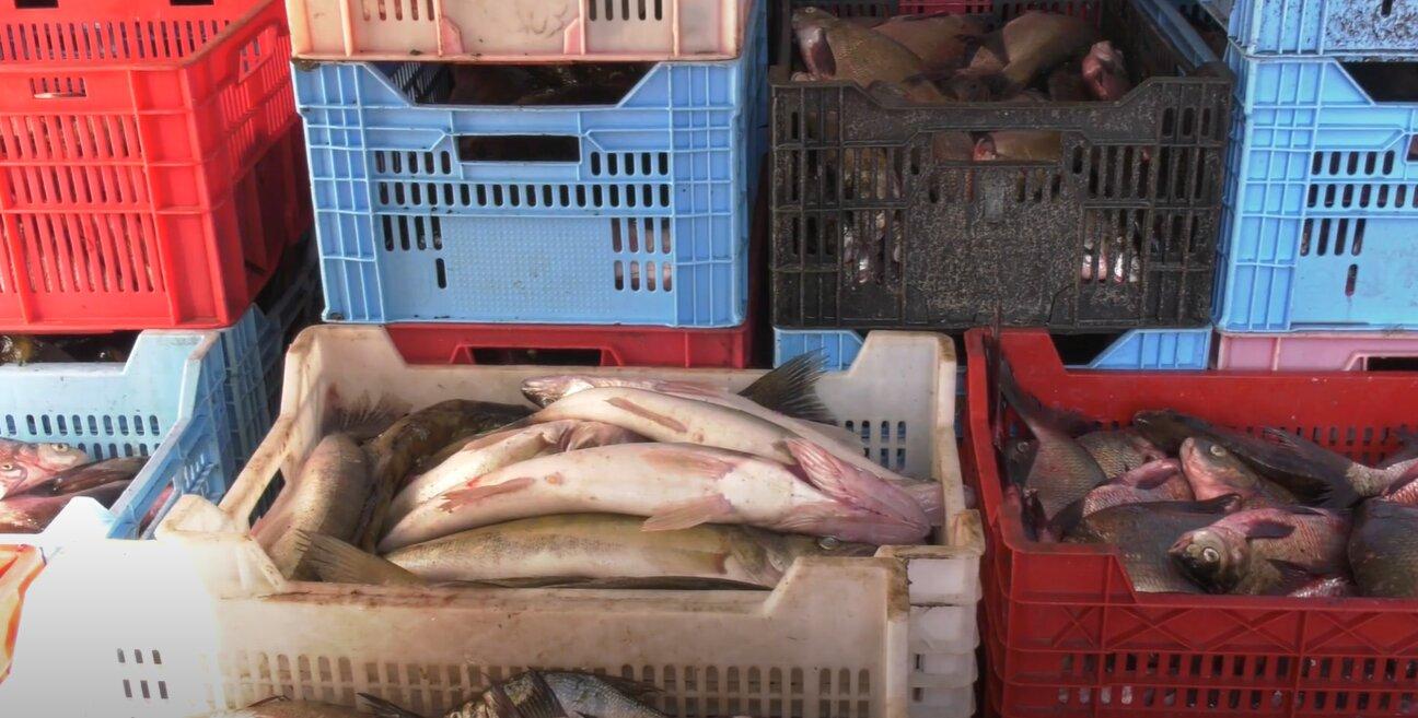 """""""Рибний день"""" тривав 5 років: на Харківщині браконьєри щодня ловили тонну риби (відео)"""