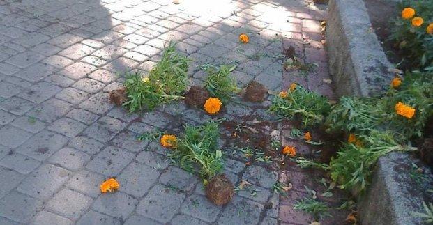 В Харькове вандалы вырвали цветы в Театральном сквере