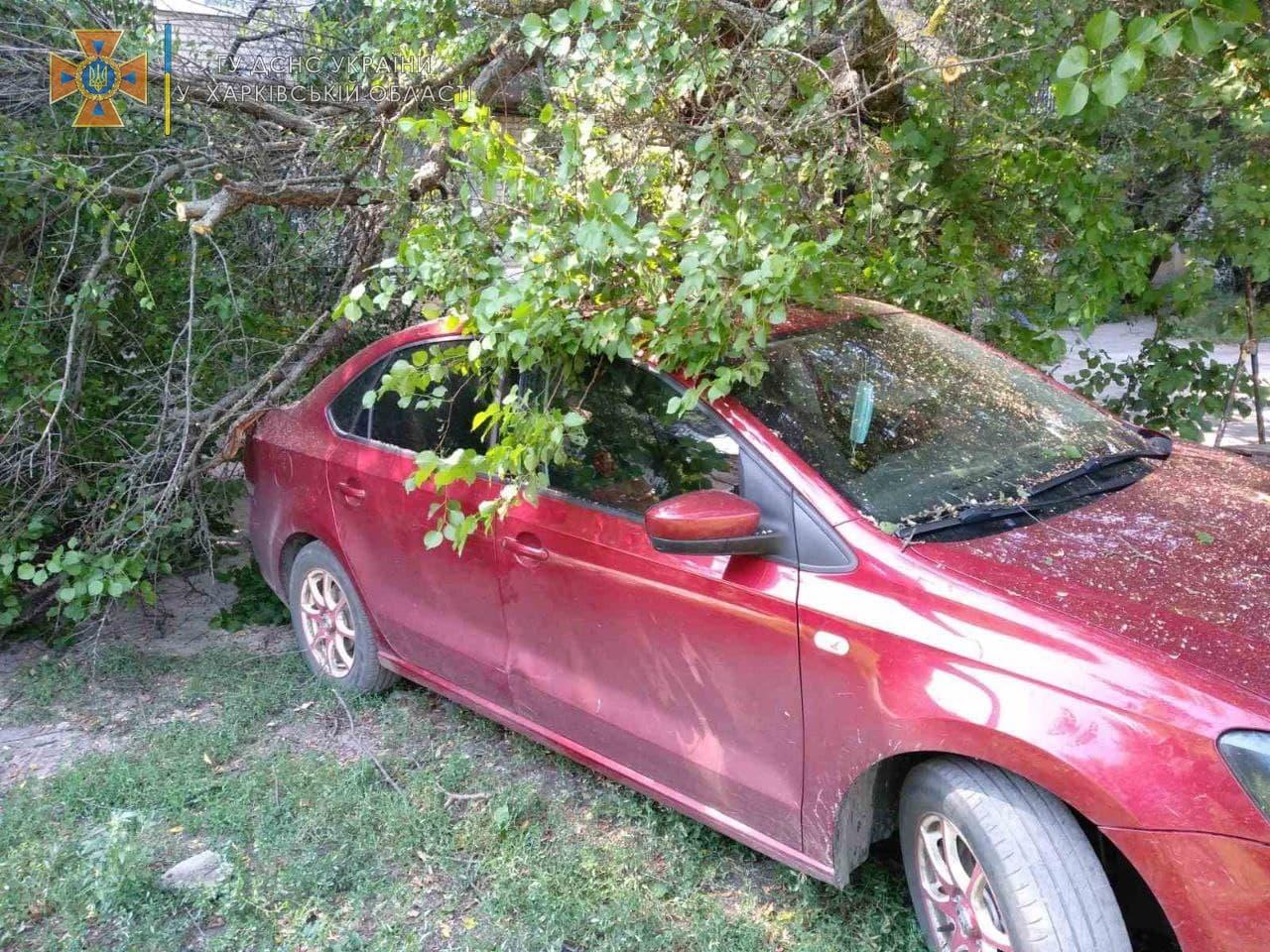 В Харьковской области на Volkswagen упало дерево (фото)