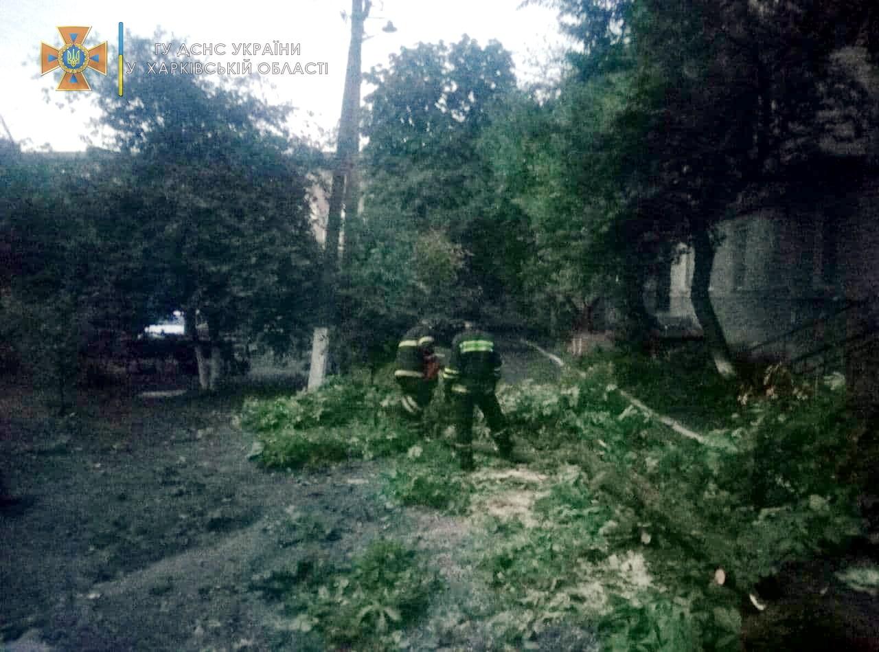 В Харьковской области из-за сильного ветра попадали деревья (фото)