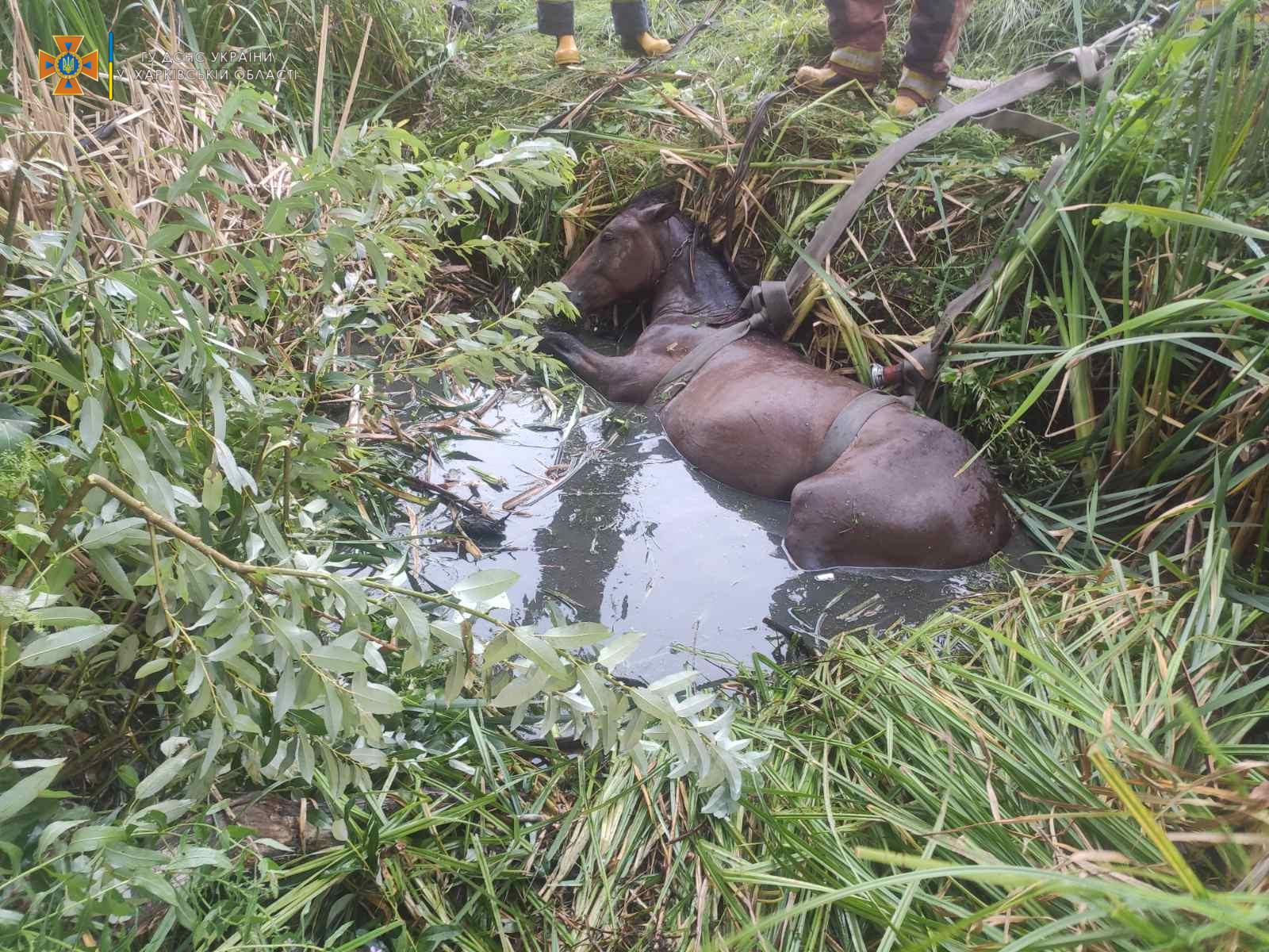 В Харьковской области спасатели вытащили коня из ямы (фоторепортаж)