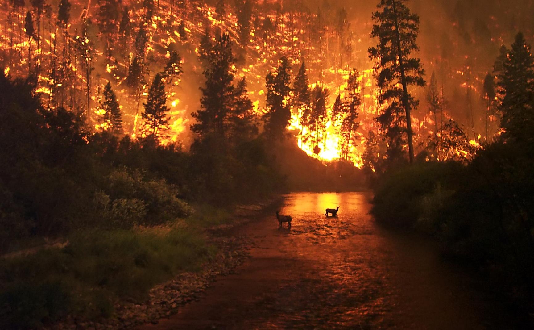 На Харьковщине – чрезвычайный уровень пожарной опасности