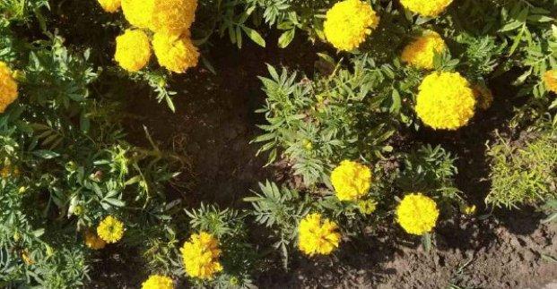 В центре Харькова вандалы разбили урны и украли цветы с клумб у памятников Гоголю и Пушкину