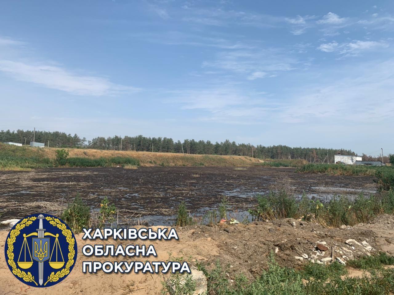 В Харьковской области свиноферма загрязняет земли отходами – прокуратура (фото)