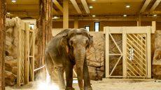 В Харьковском зоопарке из-за хронического заболевания умерла 23-летняя слониха Тэнди