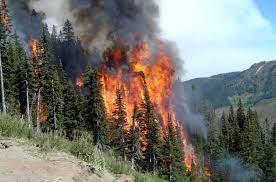 В РФ горят леса: 830 тысяч гектаров в огне