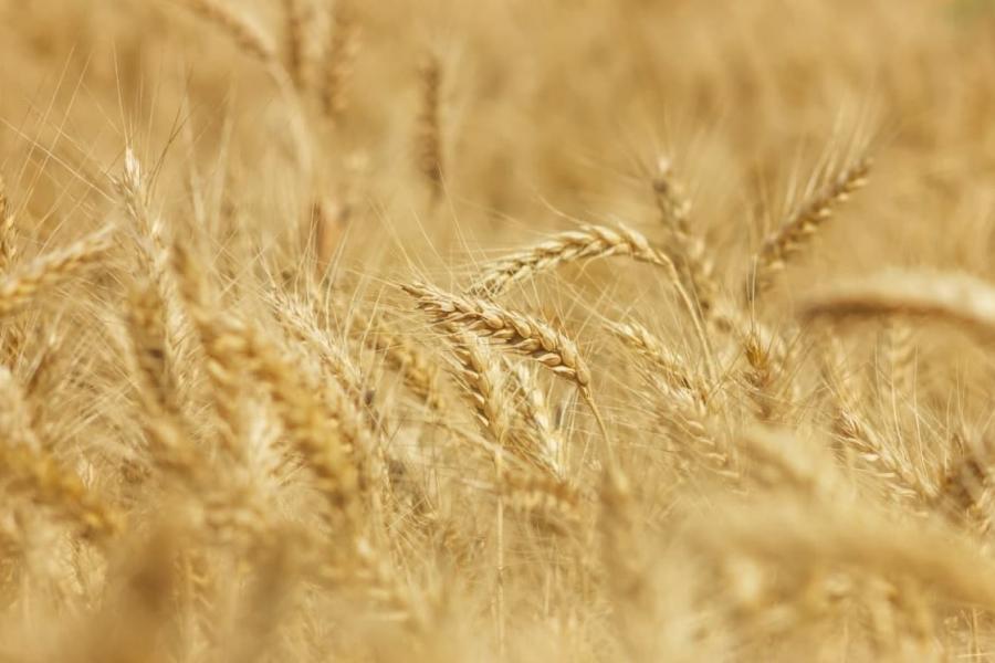 На Харьковщине собрали почти 2 млн тонн зерна