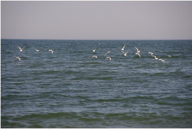 Чайки над Азовским морем