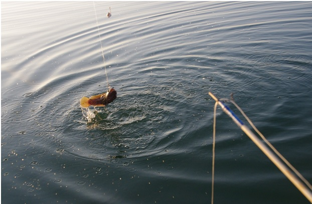 Рыбная ловля в Кирилловке