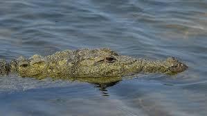 Огромный аллигатор напал на американку в Центре рептилий и птиц в штате Юта (фото, видео)