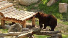 Харьковских бурых медведей переселили в новый вольер (видео)