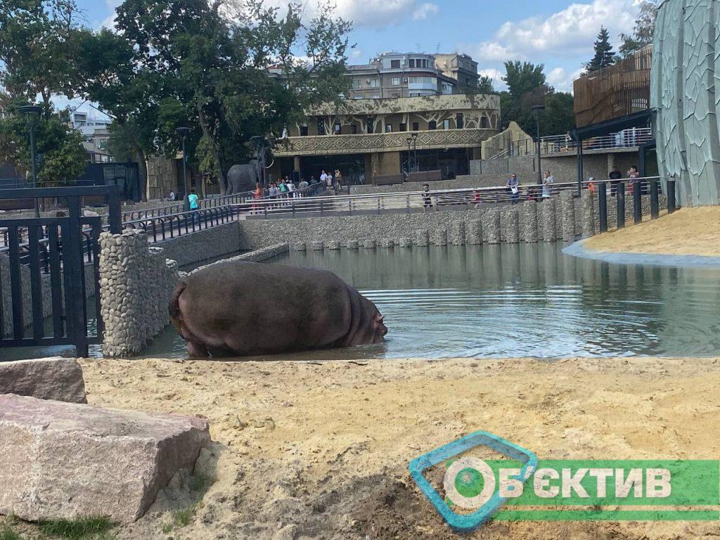 Бегемотиха Степанида в Харьковском зоопарке