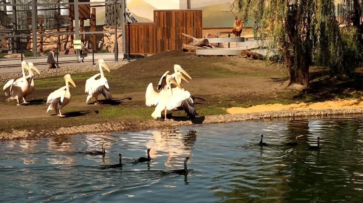В Харьковском зоопарке открыли уличный вольер для африканских пернатых (фото)