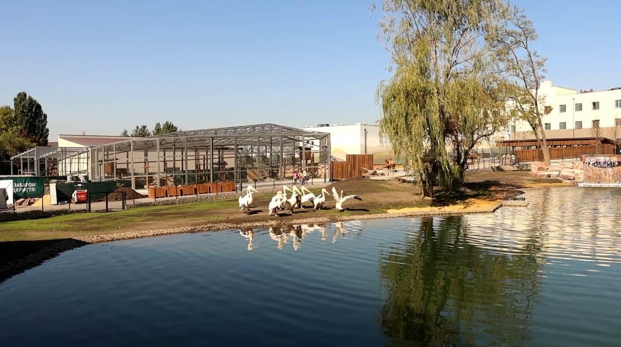 В Харьковском зоопарке отметили новоселье пеликаны и бакланы
