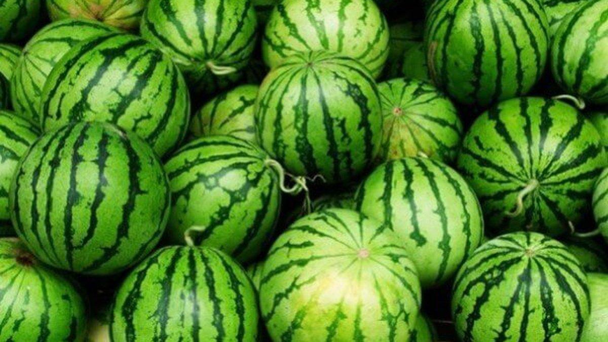 Херсон. Фермеры уничтожают арбузы из-за падения цен
