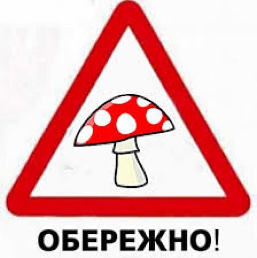 На Харьковщине – новые случаи отравления грибами
